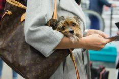 biztonság, felelős állattartás, kutya, szabály, tömegközlekedés, utazás
