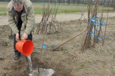 ásás, faiskola, faültetés, gyümölcsfa, ősz, tervezés