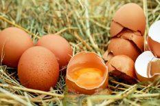 fertőzött tojás, figyelmeztetés, NÉBIH