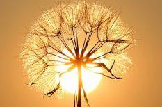 élet, halál, könyv, különleges képesség, látnok, szellem, szeretet
