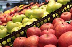 alma, gyümölcs, hémérséklet, NÉBIH, téli vitaminbomba, téliesítés
