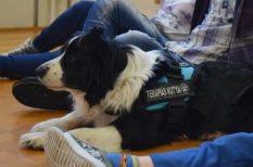 demencia, idős kor, kezdeményezés, kutya, pozitív energia, terápia