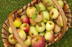 alma, egészséges, reggeli, tej, turmix