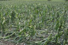 időjárás, jég, kár, klímaváltozás, magyarország, mezőgazdaság, vihar