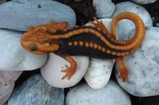 fekete kereskedelem, felfedezés, Mekong, Thaiföld, új állat- és növényfajok, védelem, WWF-jelentés
