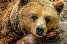 állatkert, árnyék, családi programok, fesztivál, gyerekek, időjóslás, medve, programok