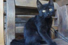 cica, macska, örökbefogadás