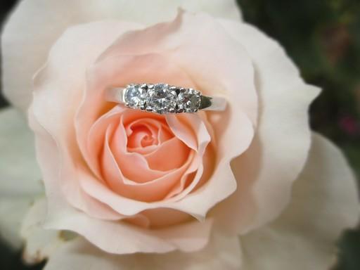 Rózsa eljegyzési gyűrűvel, Kép: pxabay