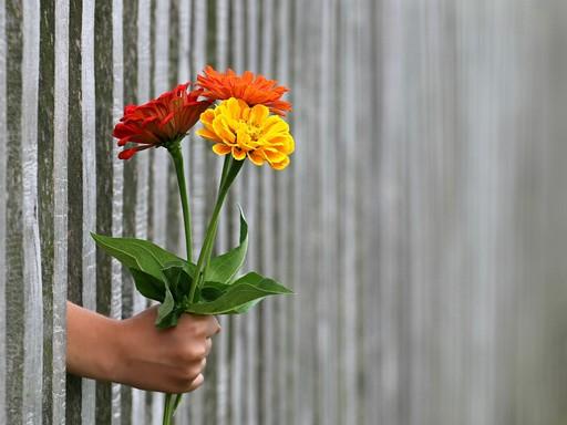 Virágot adó kéz, Kép: pixabay