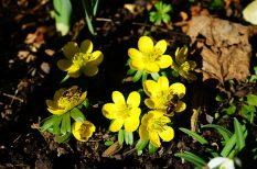 kirándulás, Pécs, PTE Botanikus Kertje, szabadidő, tavasz, Téltemető virág, Vanda 'Anna'