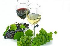 bor, borászat, bortrend, kistermelő