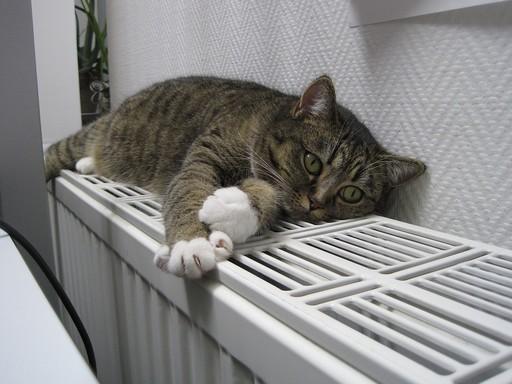 Cica a radiátoron, Kép: pixabay