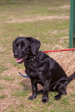 Fekete kutyus, Kép: Rex Alapítvány