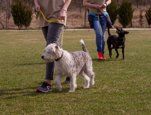 Kutyatréning, Kép: Rex Alapítvány