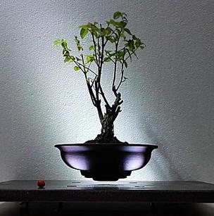 Lebegő bonsai, Kép: gardenexpo