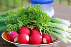 hagyma, karalábé, primőr, retek, sárgarépa, tavasz, zöldségek
