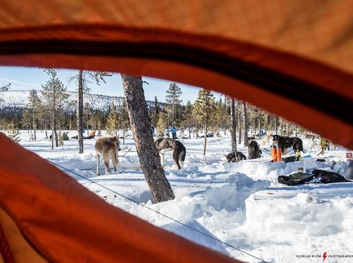 Északi-sark kutyaszánokkal, Kép: sajtóanyag