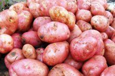 joghurtos, retek, saláta, újburgonya, újhagyma, újkrumpli