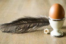 húsvét, szimbólum, tojás