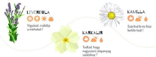 Gyógynövények, Kép: ShopAlike-infografika