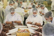 eredetellenőrzés, FAO, fogás-dokumentáció, hal, illegális halászat, kereskedelem