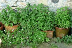 erkély, gyógynövény, kertészkedés, otthon, tavasz, terasz, ültetés, zöldség