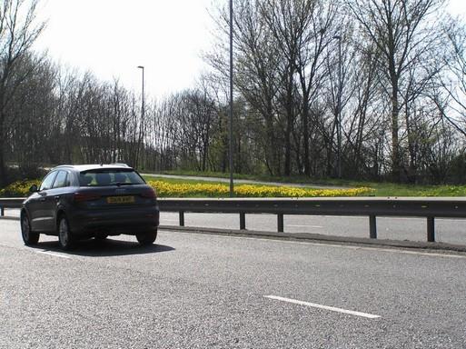 Nárciszok az angol autópálya mellett, Kép: László Márta