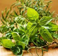 friss, fűszernövény, piac, tárolás, zöldfűszer