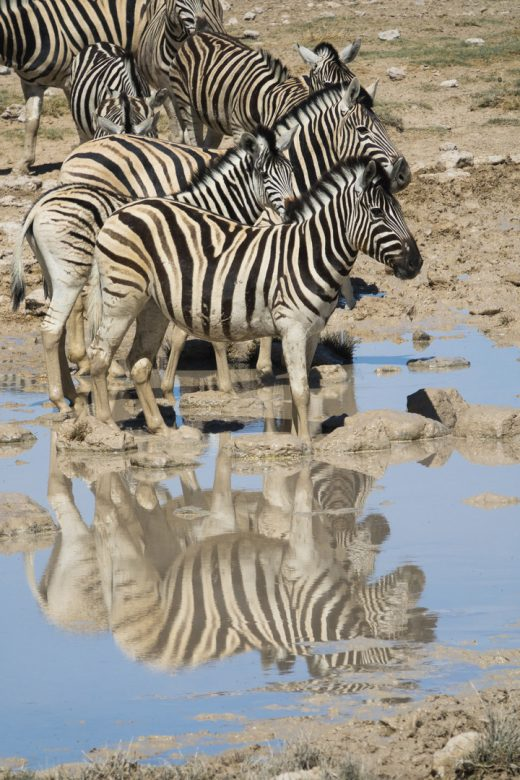 Etosha National Park, Namibia.