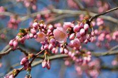 húsvét, irodalom, József Attila, költészet, kultúra, rendezvények, szerelem, tavasz, versek