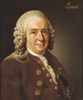 Carl von Linné, Kép: wikimedia