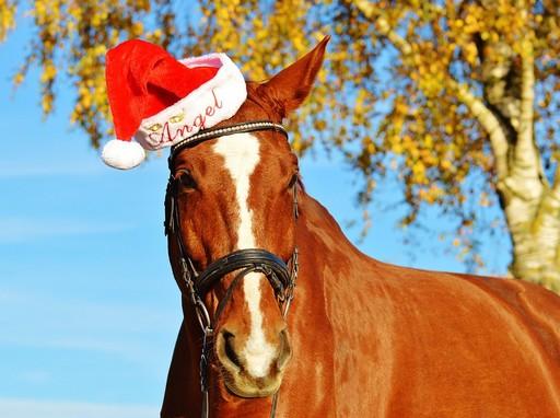 Ló ősszel karácsonyi sapkában, Kép: pixabay