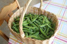 pesto, spenót, tagliatelle, tavasz, tészta, zöld, zöldborsó