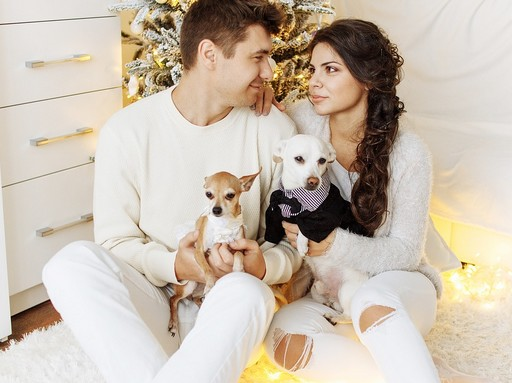 Szerelmespár kutyákkal, Kép: pixabay