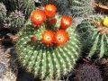 Füvészkert, hétvégi program, kaktusz, kiállítás, vásár, virág
