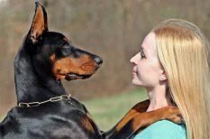 állati viselkedés, érzelem, hang, kutatás, kutya