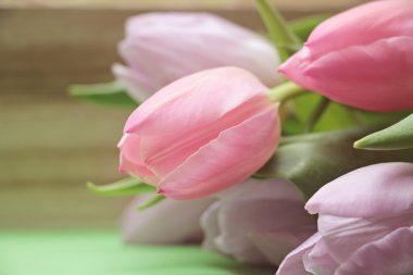 tulipán3