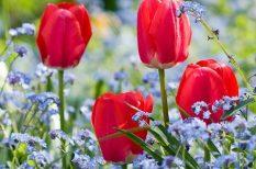 anya, anyák napja, család, költészet, május, szeretet, versek