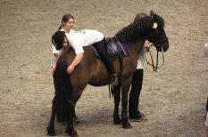 felvételi, gyógypedagógus, gyógytornász, képzés, lovasterapeuta