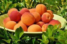 barack, gyümölcs, kopasz barack, lapos barack, nektarin, nyár, őszibarack, sárgabarack