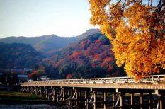 gasztronómia, japán, japánspecialista, Momiji, sakura, turizmus, utazás