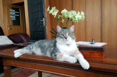 állattartás, cica, feladat, felelősség, kutya, RTL, tanács, tévéműsor