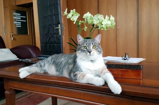 Cicus, akinek az is jól áll, hogy a fejéből kinő egy orchidea, Kép: RTL