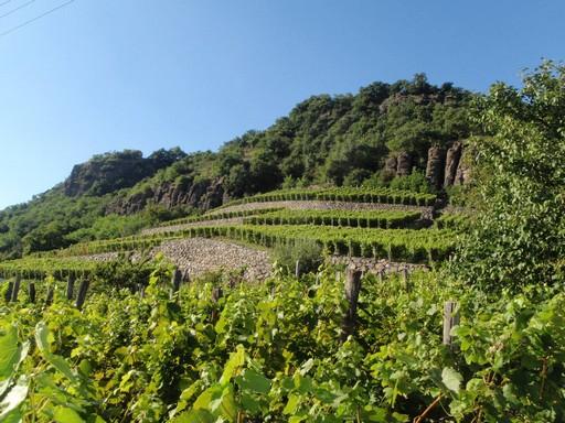 Somló-hegy, szőlőültetvény, Kép: wikimedia