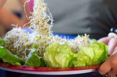 augusztus, Hevesi Tamás, Kőbánya, Vegetáriánus Fesztivál, zöldség