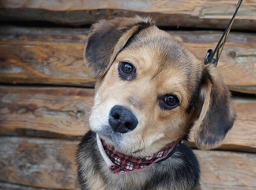 Gazdira várva, Kép: Rex Kutyaotthon Alapítvány