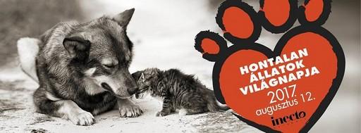 Hontalan Állatok Világnapja, augusztus 12, Kép: Rex Aklapítvány