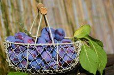 chutney, gombóc, ősz, pite, szilva