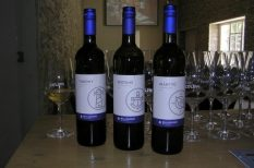 balaton, bor, Bujdosó, címke, hajózás, Matróz sorozat, víz