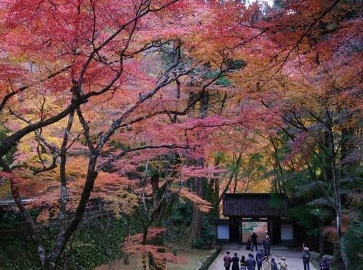 Korankei, Kép: Japánspecialista